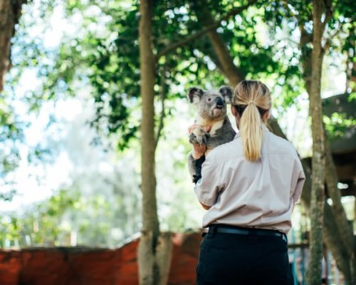 koala-with-handler-at-dreamworld-corroboree